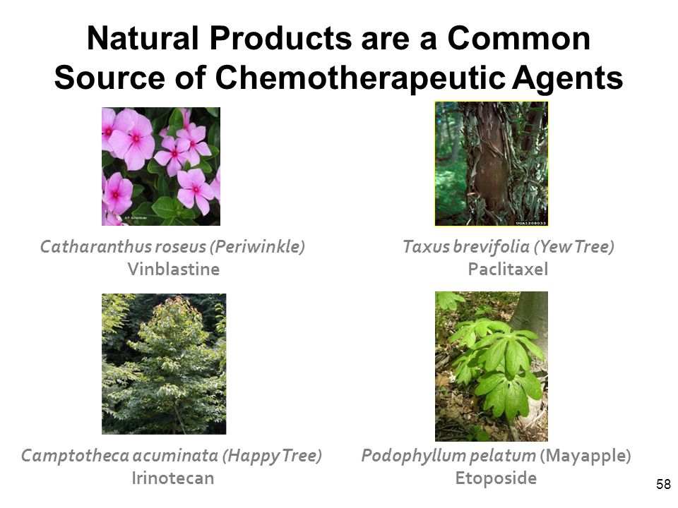 Natural Products are a Common Source of Chemotherapeutic Agents
