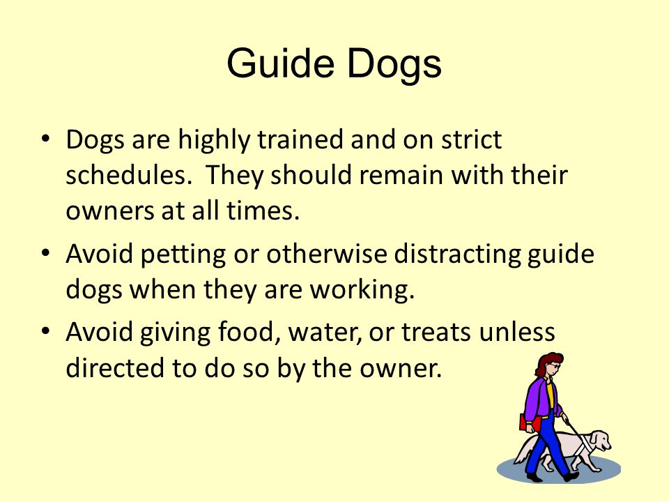 Guide Dogs Dogs are highly trained and on strict schedules. They should remain with their owners at all times.
