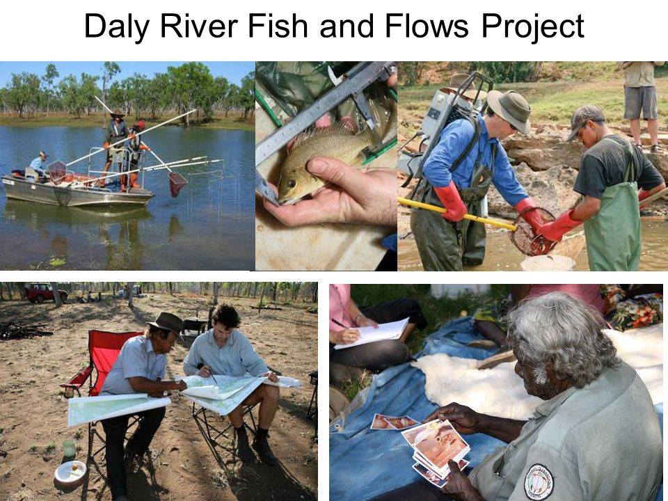 Daly River Fish and Flows Project