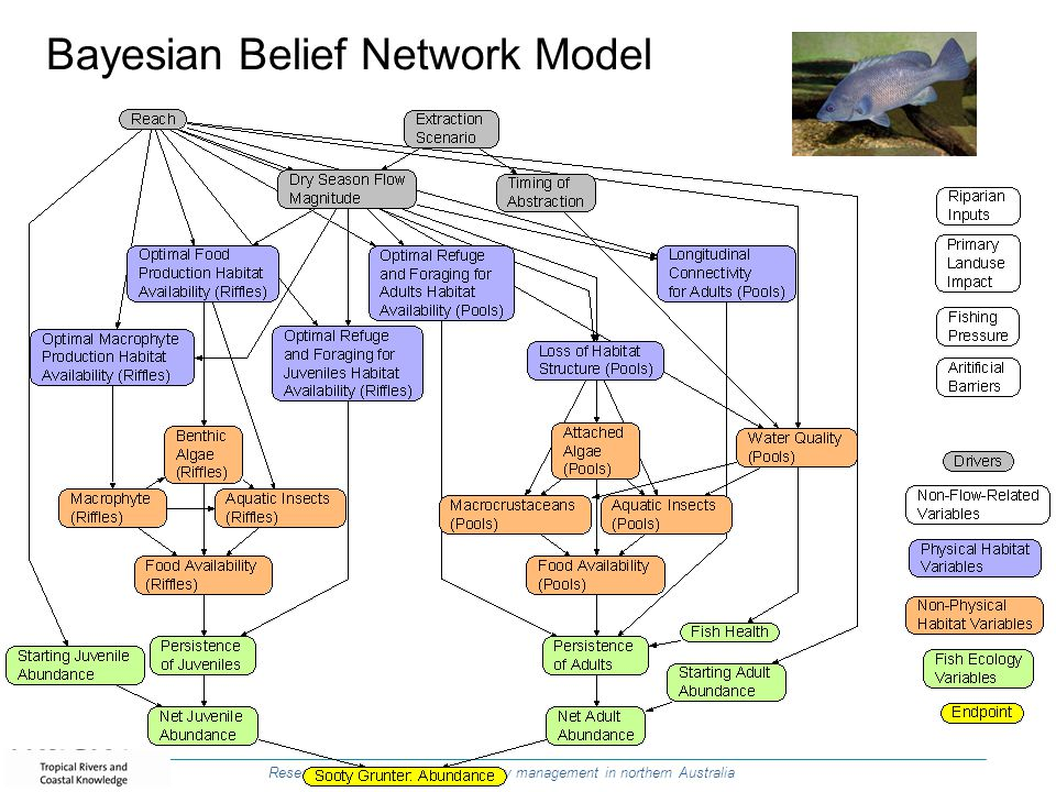 Bayesian Belief Network Model