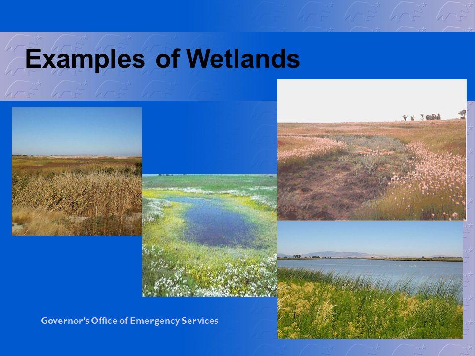 Examples of Wetlands
