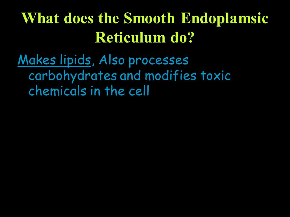 What does the Smooth Endoplamsic Reticulum do