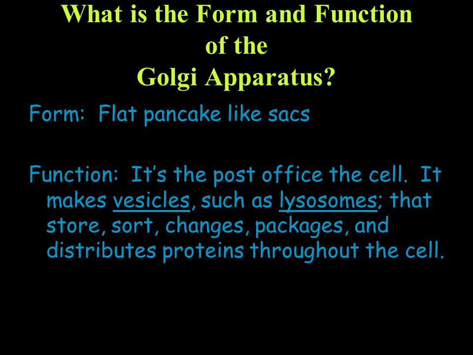 What is the Form and Function of the Golgi Apparatus