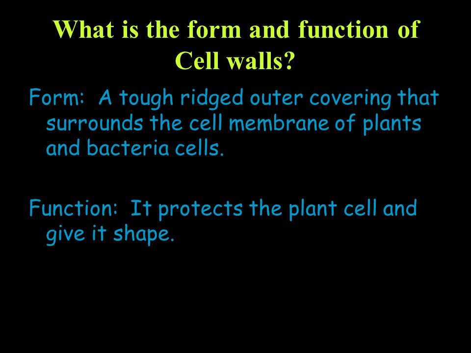 What is the form and function of Cell walls