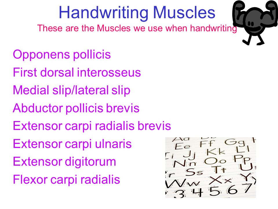 Handwriting Muscles These are the Muscles we use when handwriting