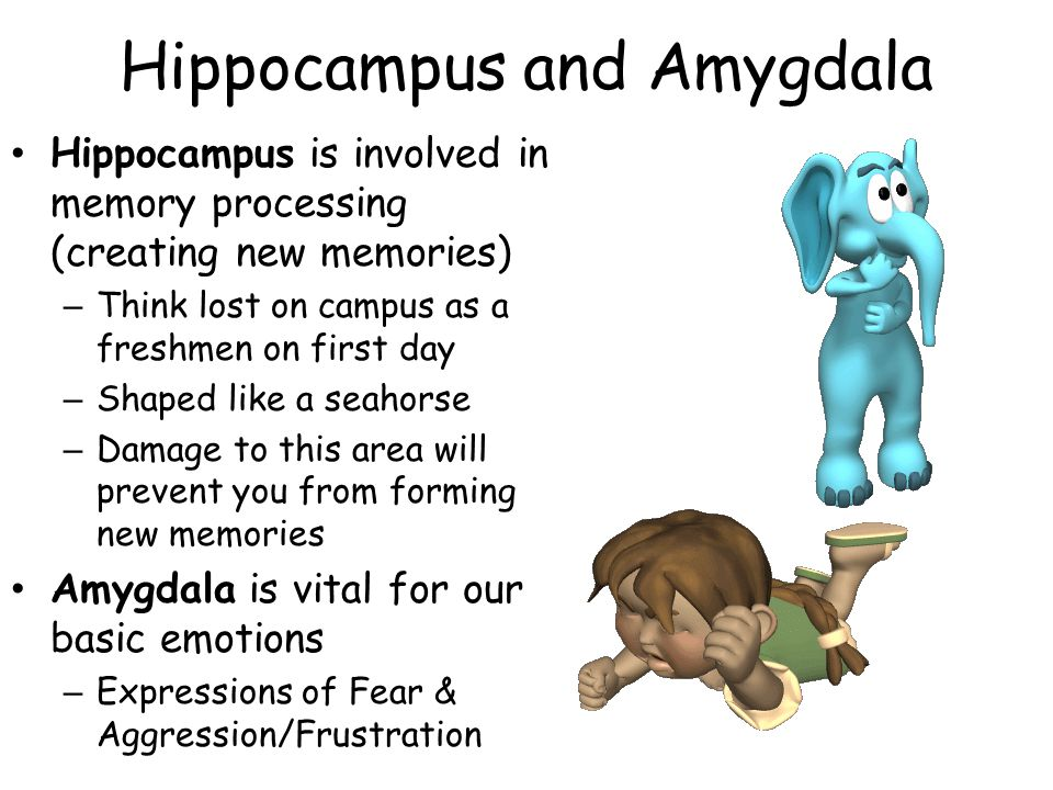 Hippocampus and Amygdala