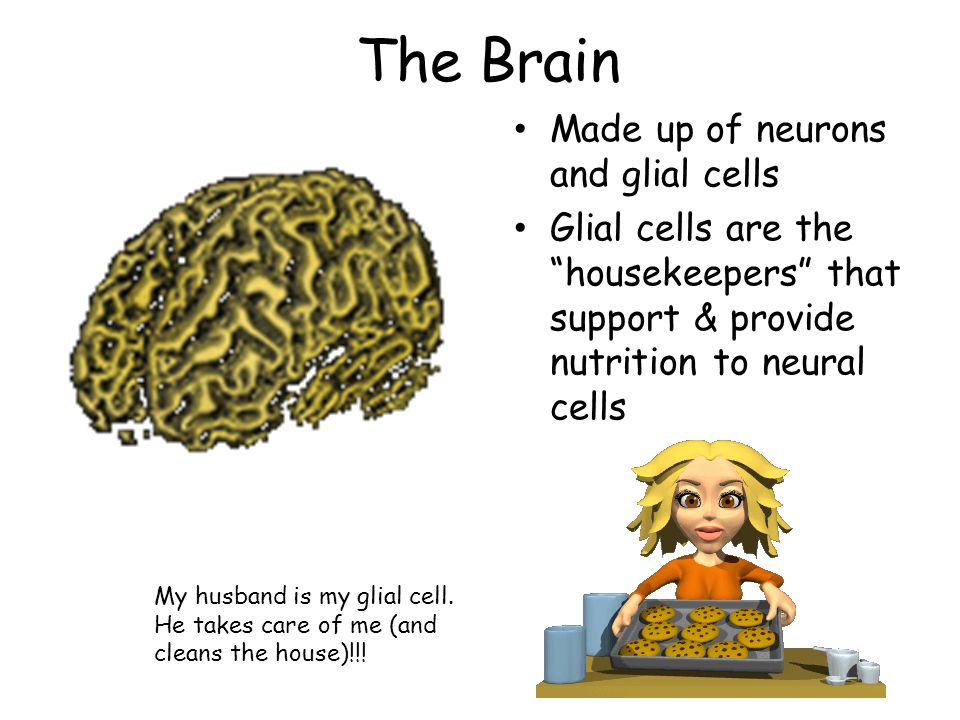 The Brain Made up of neurons and glial cells