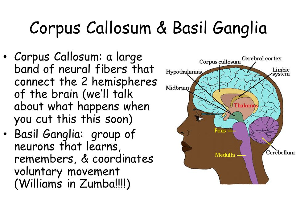 Corpus Callosum & Basil Ganglia