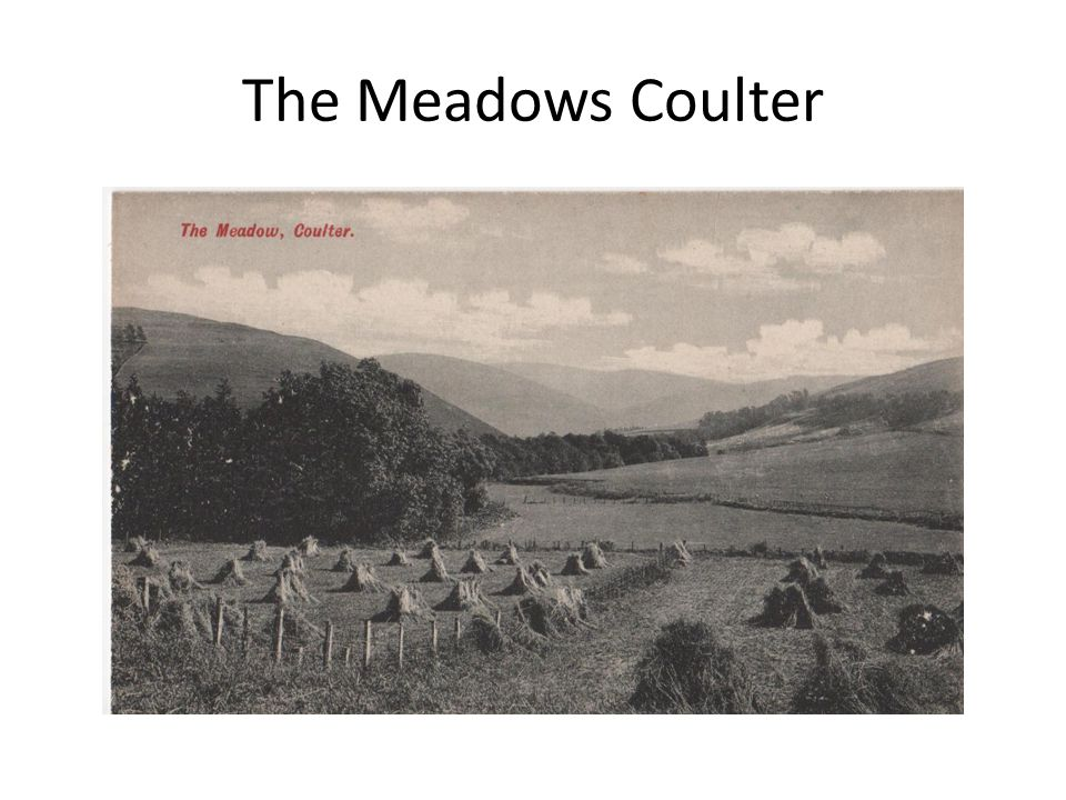The Meadows Coulter