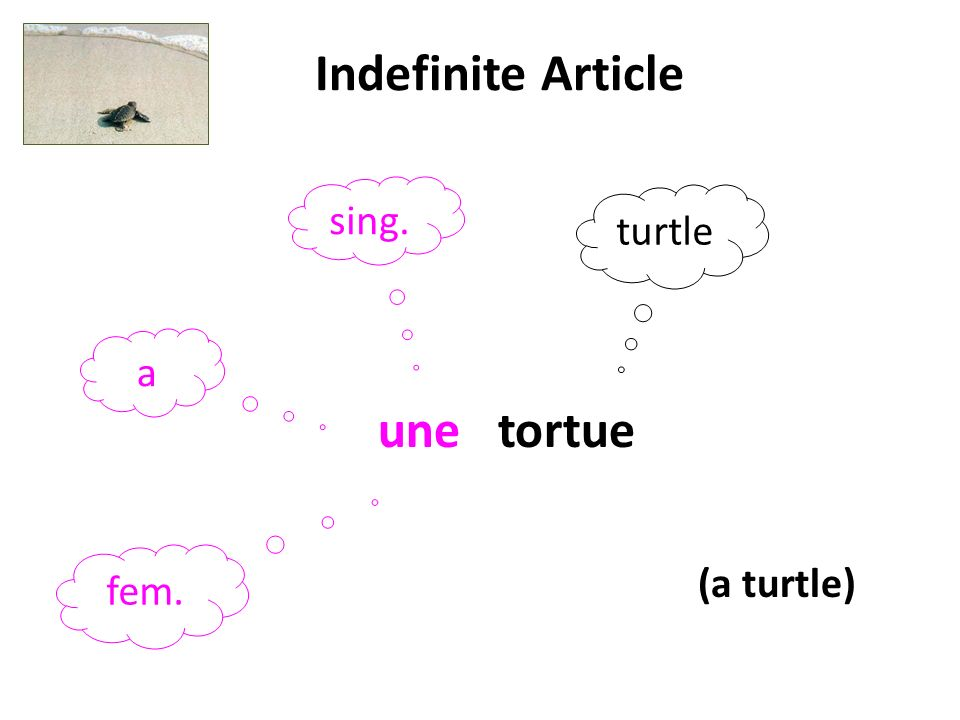 Indefinite Article sing. turtle a une tortue fem. (a turtle)