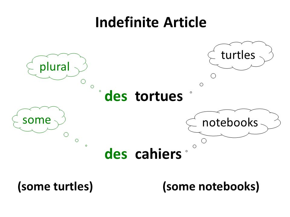 Indefinite Article des tortues des cahiers turtles plural some