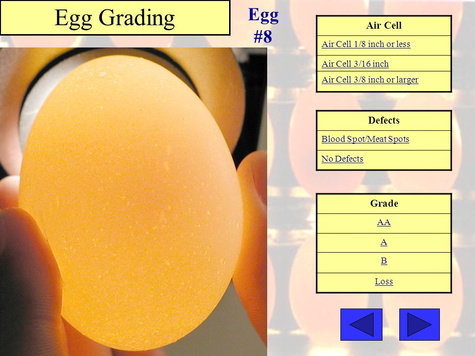 Egg Grading Egg #8 Air Cell Defects Grade Air Cell 1/8 inch or less