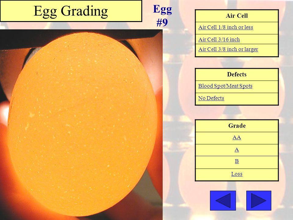 Egg Grading Egg #9 Air Cell Defects Grade Air Cell 1/8 inch or less