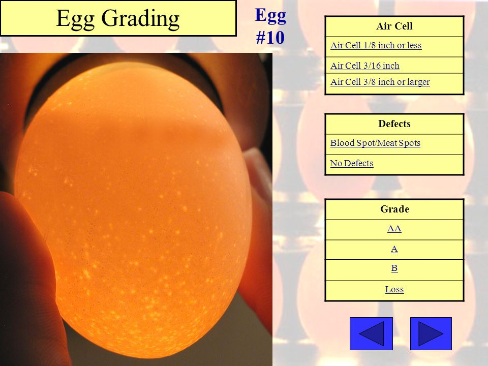 Egg Grading Egg #10 Air Cell Defects Grade Air Cell 1/8 inch or less