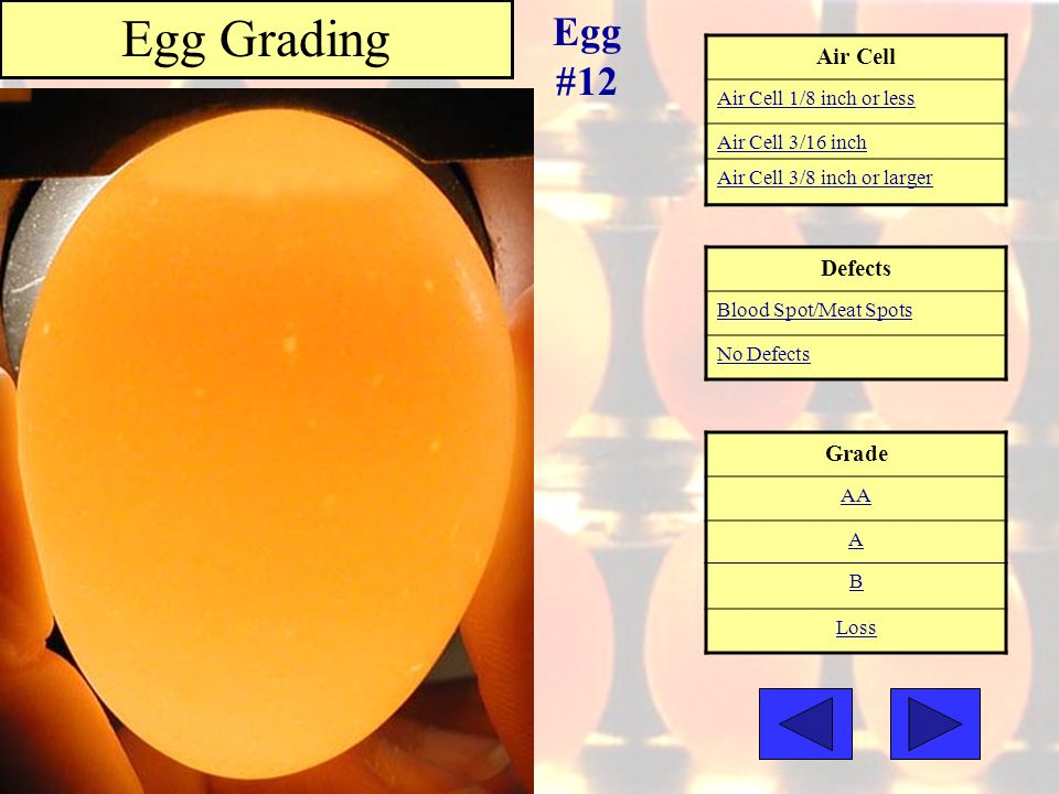 Egg Grading Egg #12 Air Cell Defects Grade Air Cell 1/8 inch or less
