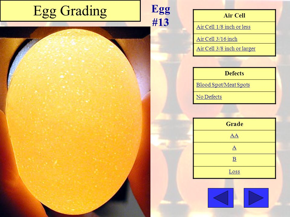 Egg Grading Egg #13 Air Cell Defects Grade Air Cell 1/8 inch or less