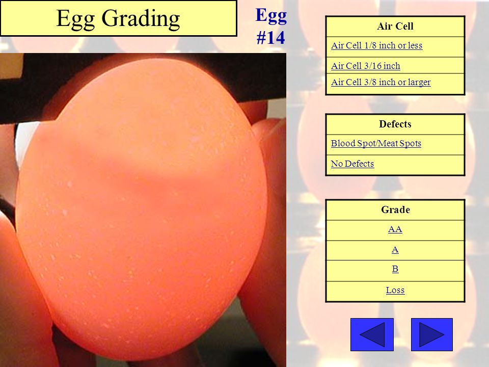 Egg Grading Egg #14 Air Cell Defects Grade Air Cell 1/8 inch or less