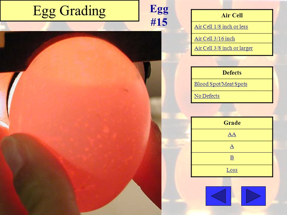Egg Grading Egg #15 Air Cell Defects Grade Air Cell 1/8 inch or less