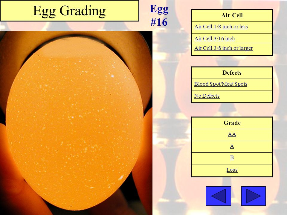 Egg Grading Egg #16 Air Cell Defects Grade Air Cell 1/8 inch or less