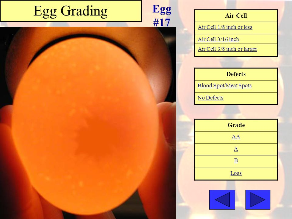 Egg Grading Egg #17 Air Cell Defects Grade Air Cell 1/8 inch or less