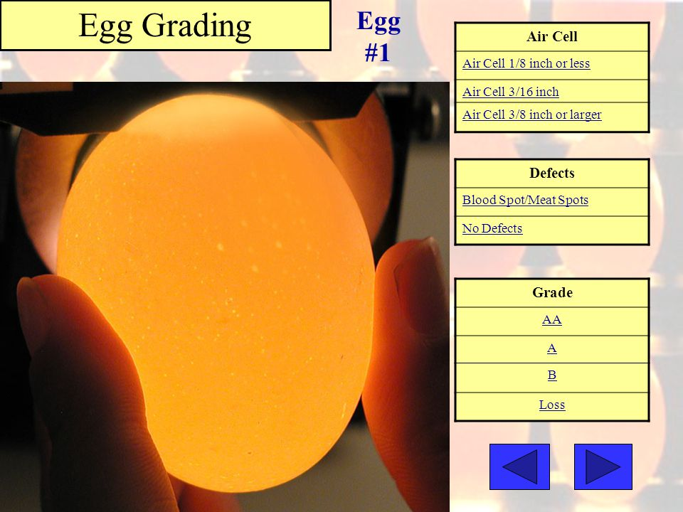 Egg Grading Egg #1 Air Cell Defects Grade Air Cell 1/8 inch or less
