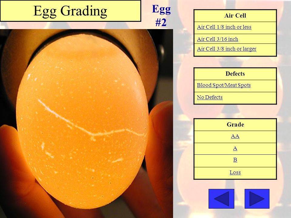 Egg Grading Egg #2 Air Cell Defects Grade Air Cell 1/8 inch or less