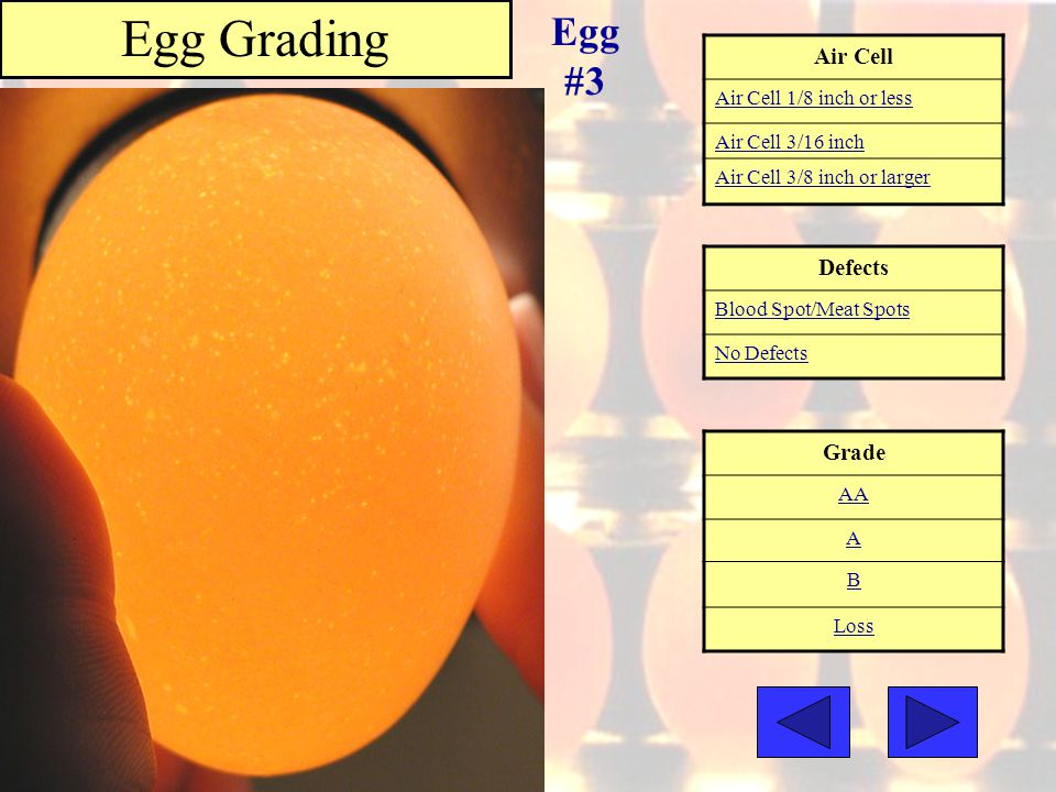 Egg Grading Egg #3 Air Cell Defects Grade Air Cell 1/8 inch or less