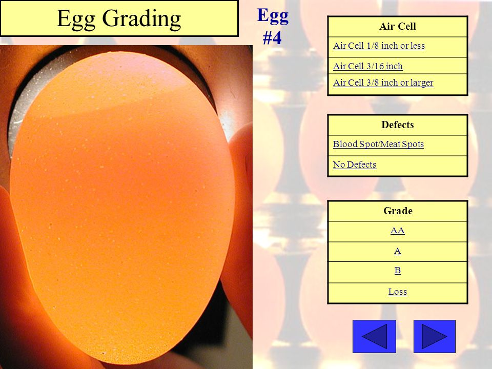Egg Grading Egg #4 Air Cell Defects Grade Air Cell 1/8 inch or less