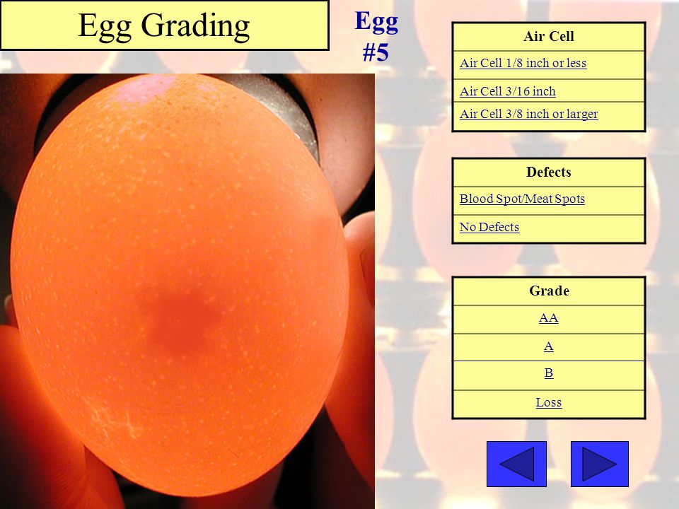 Egg Grading Egg #5 Air Cell Defects Grade Air Cell 1/8 inch or less