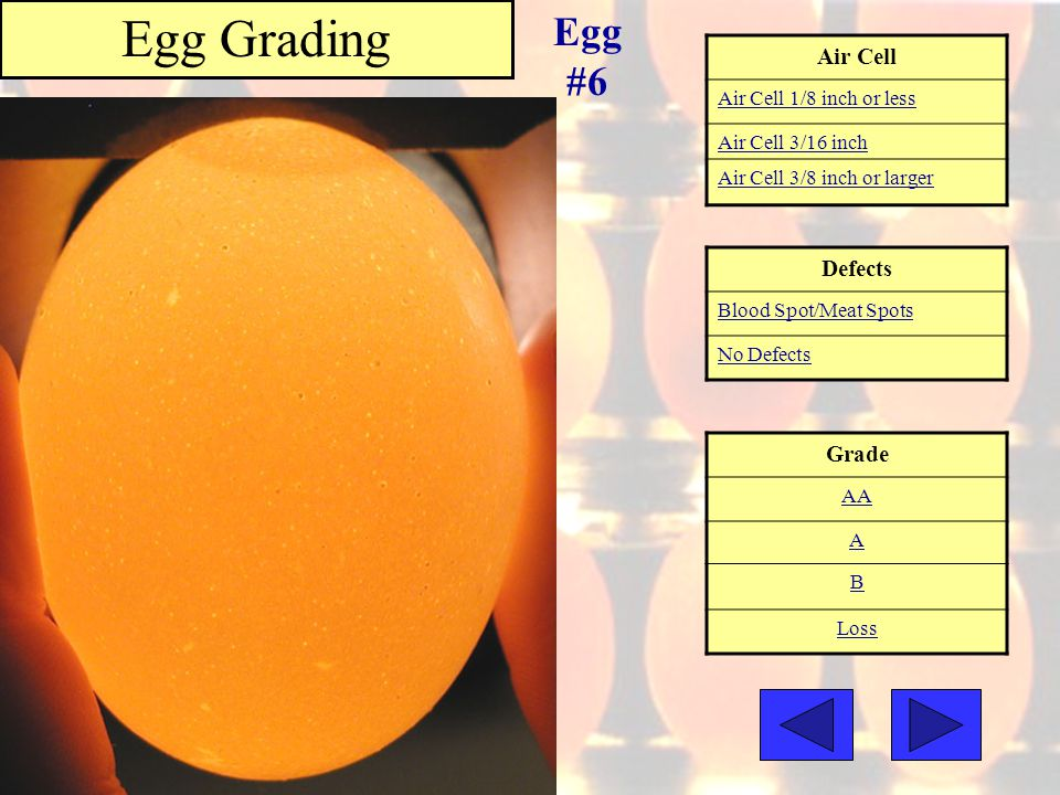 Egg Grading Egg #6 Air Cell Defects Grade Air Cell 1/8 inch or less