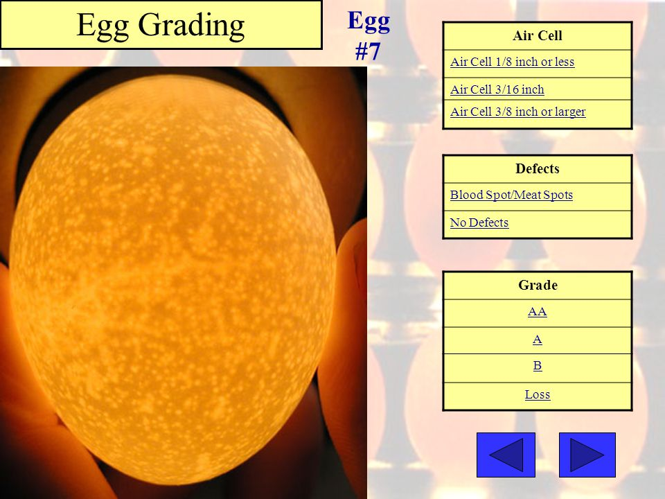 Egg Grading Egg #7 Air Cell Defects Grade Air Cell 1/8 inch or less
