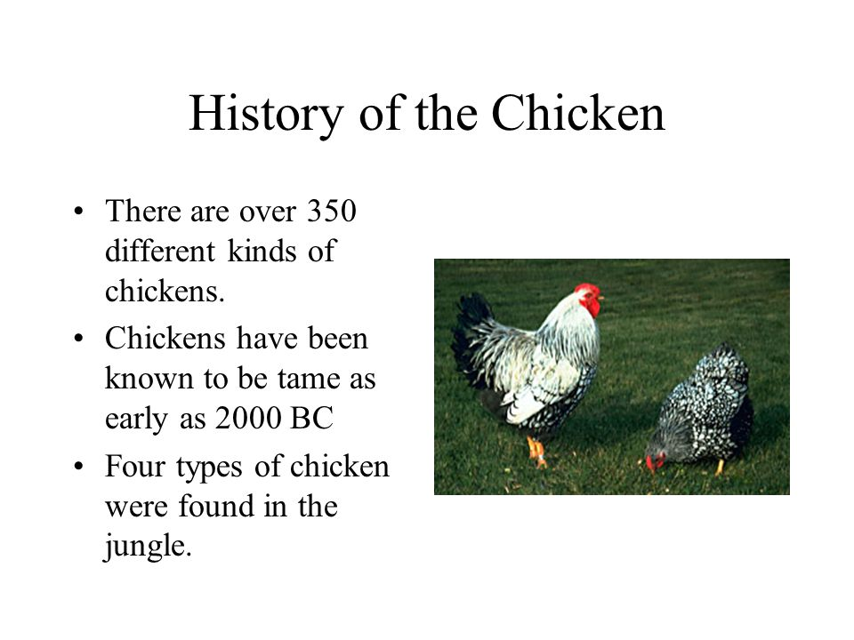 History of the Chicken There are over 350 different kinds of chickens.