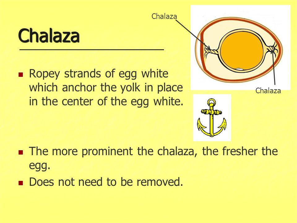Chalaza Chalaza.