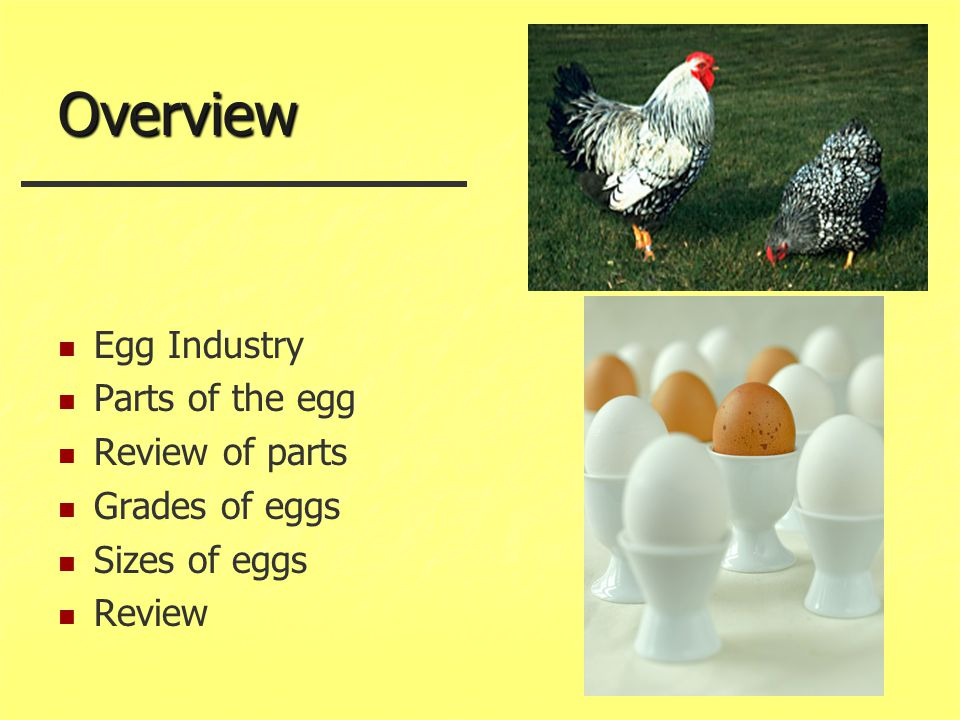 Overview Egg Industry Parts of the egg Review of parts Grades of eggs