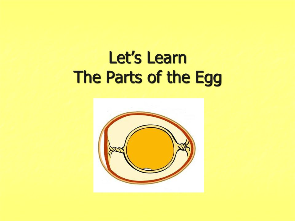 Let's Learn The Parts of the Egg