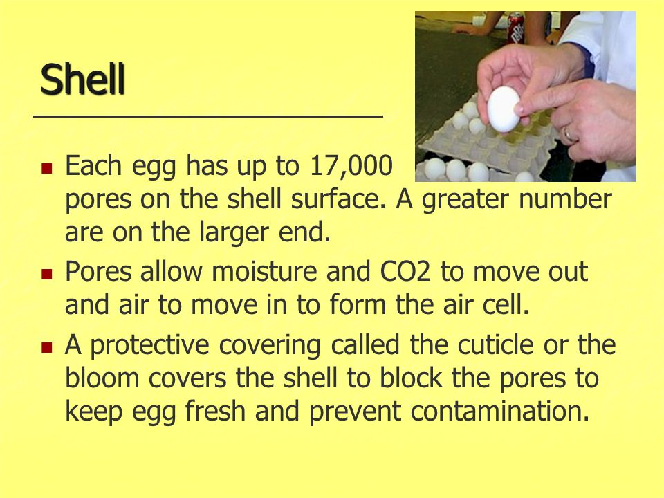 Shell Each egg has up to 17,000 pores on the shell surface. A greater number are on the larger end.