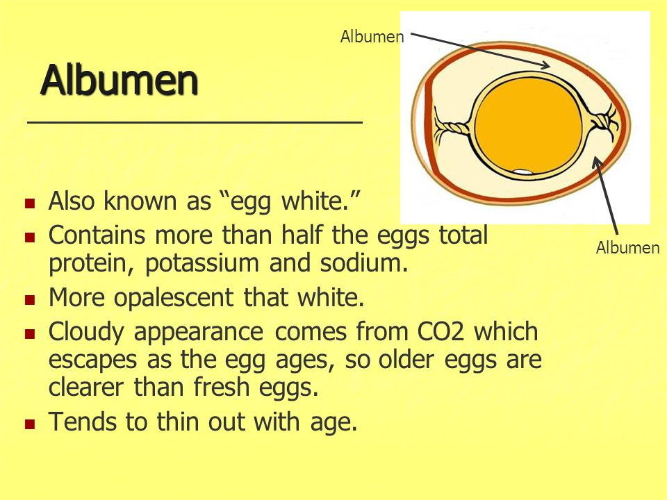Albumen Also known as egg white.