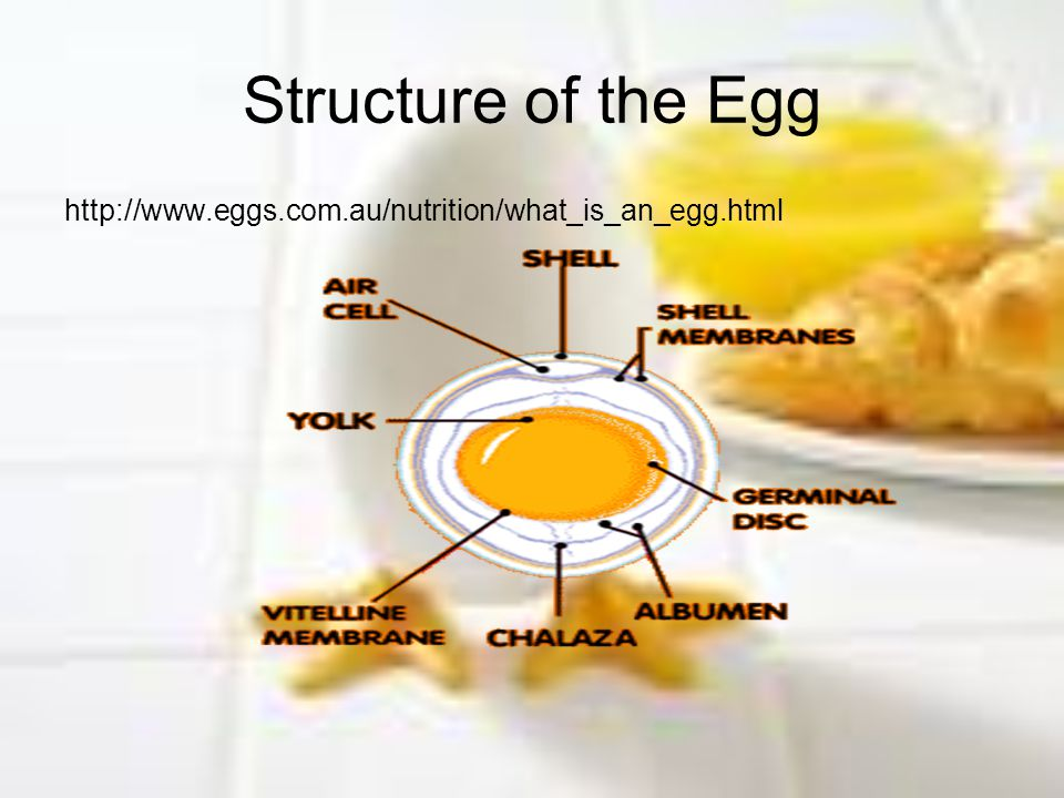 Structure of the Egg http://www.eggs.com.au/nutrition/what_is_an_egg.html