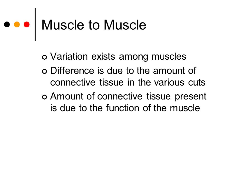 Muscle to Muscle Variation exists among muscles
