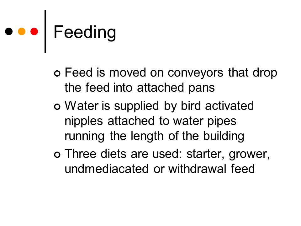 Feeding Feed is moved on conveyors that drop the feed into attached pans.