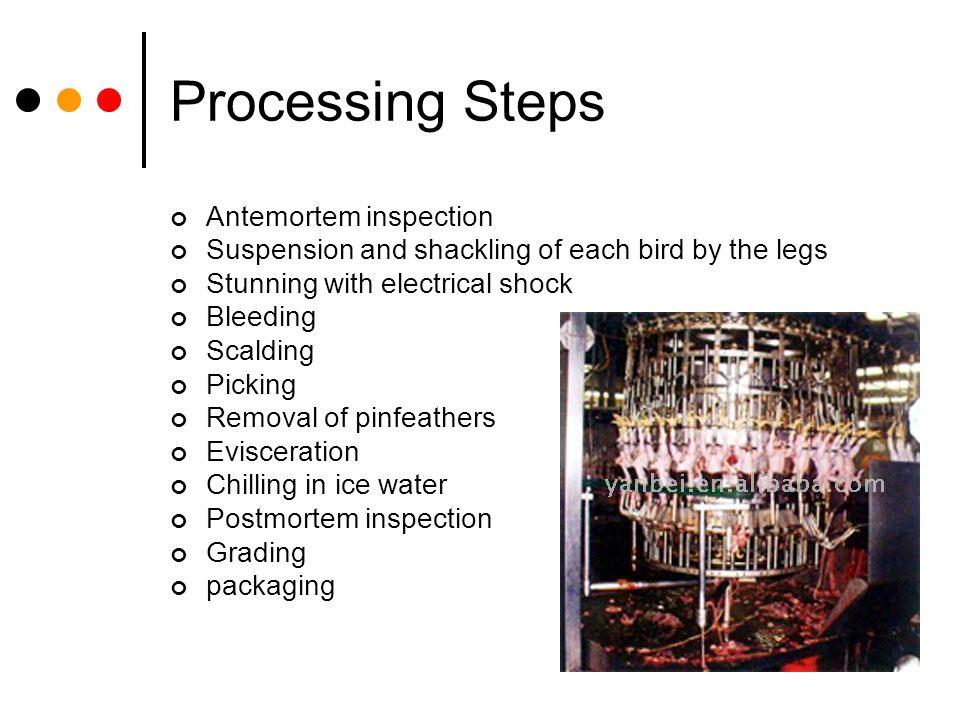 Processing Steps Antemortem inspection