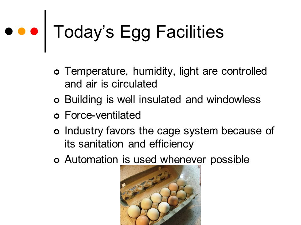 Today's Egg Facilities