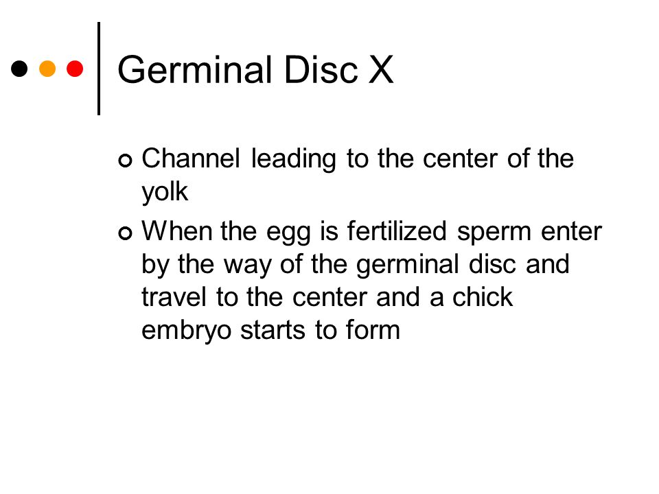 Germinal Disc X Channel leading to the center of the yolk