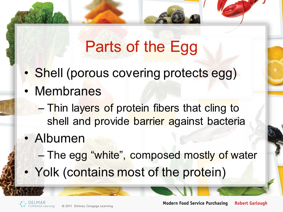 Parts of the Egg Shell (porous covering protects egg) Membranes