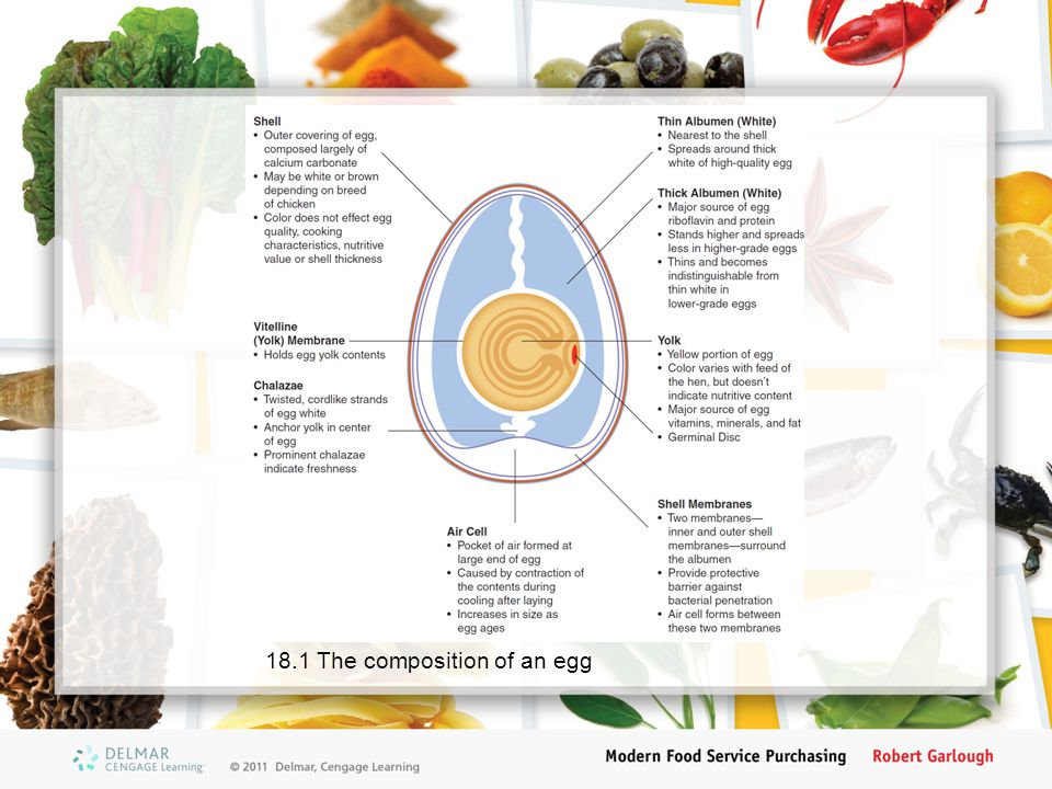 18.1 The composition of an egg