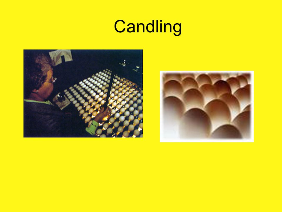 Candling . What is Candling