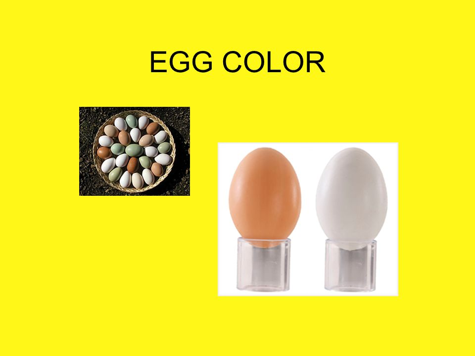 EGG COLOR Color Egg shell and yolk color may vary.