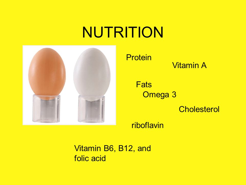 NUTRITION Protein Vitamin A Fats Omega 3 Cholesterol riboflavin