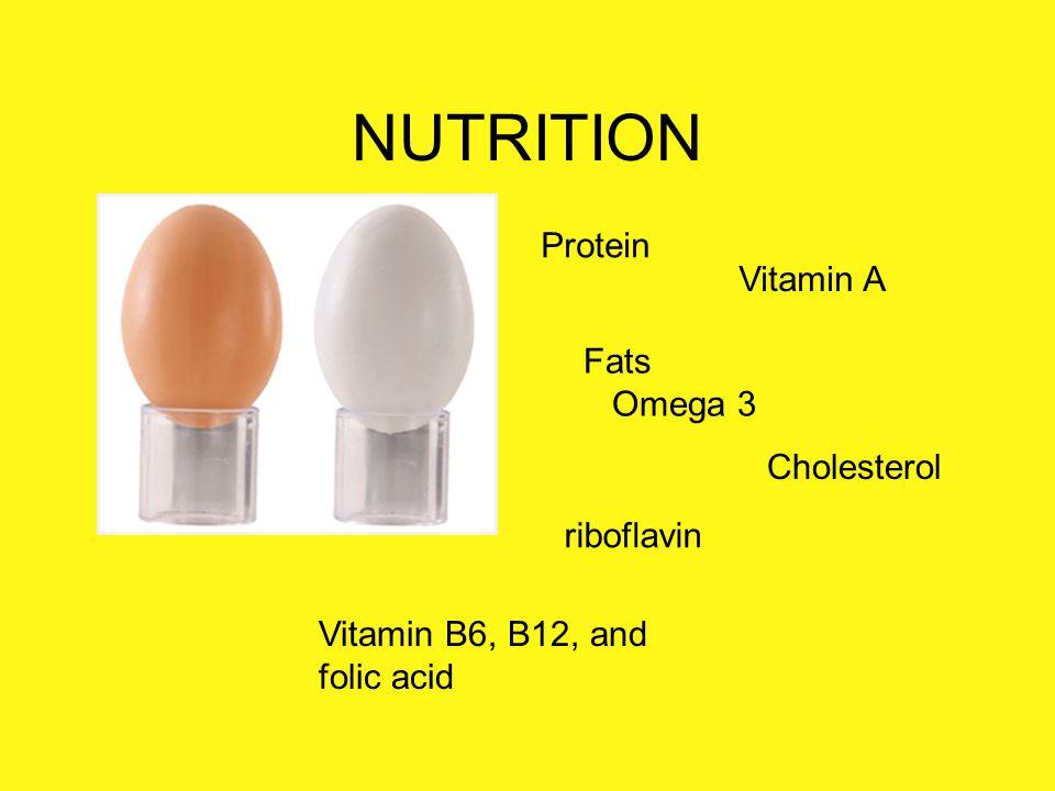 NUTRITION Protein Vitamin A Fats Omega 3 Cholesterol riboflavin
