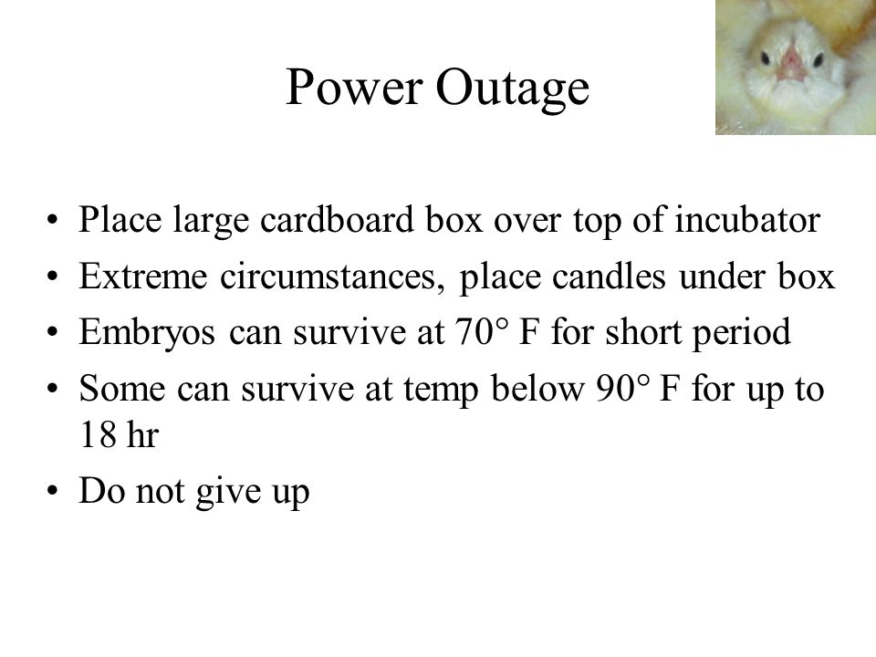 Power Outage Place large cardboard box over top of incubator